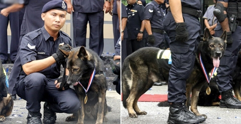 pdrm-sets-up-first-ever-k-9-memorial-to-honour-the-sacrifices-of-police-dogs-world-of-buzz